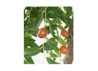 Gizemli Meyve