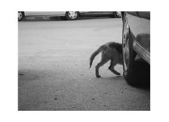 Kaçan, suçlu kedidir...)))