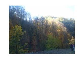 Zonguldak/Gaca ormanlarını yürüdük.