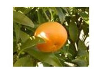 Gramantin mandalinanın tadı bir başka güzel...