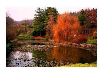 Arboretumda doğayı ve kendinizi keşfedebilirsiniz
