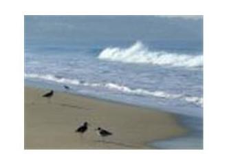 Yelkovan kuşlarının peşi sıra
