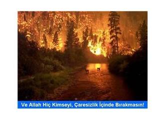 TESADÜF....Yangınların yüzde 79'u 0 - 400 metre arası sahil şeridinde çıktı !