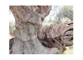 Erotik ağaçlar!