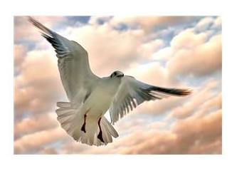 Kafesten bir kuş uçtu