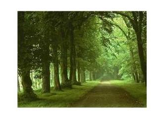Sessizlik,Doğa,İnsan