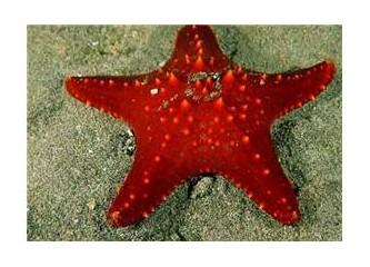 Belki deniz yıldızlarının ölmesi gerekiyordur..