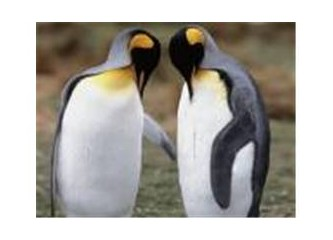 Son iki penguen