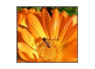Arılarla beraber yok mu oluyoruz?