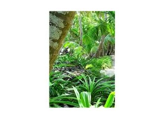 Çiçek Bahçesi' nden MB Hatıra Ormanı' na...