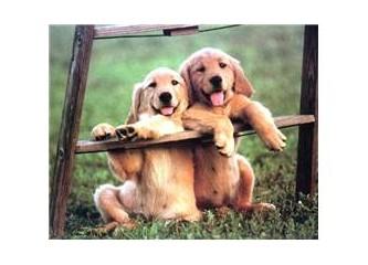 İnsan Köpeği Isırırsa!