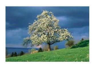 Yaşasın sonunda benim de bir ağacım oldu...