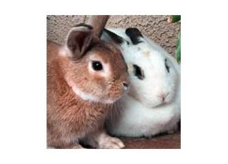 Tavşanlar ve tazılar