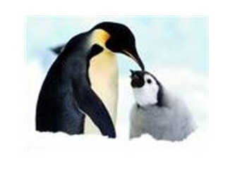 Penguenlerin yaşamı hakkındaki özellikler