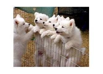 Hayvanlarla konuşmak -4- Hayvanları dinlemeyi öğrenmek