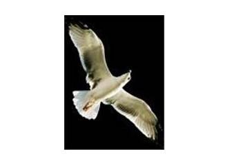 Kuş olmak