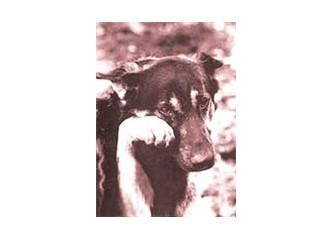 Köpeğimiz Bobi