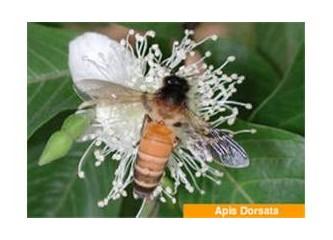 Eşek arısı mı sandınız?