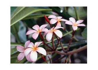 Çiçekçe