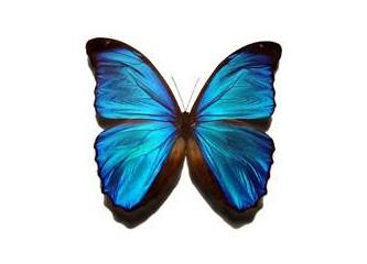 Siz hiç kelebek oldunuz mu ?