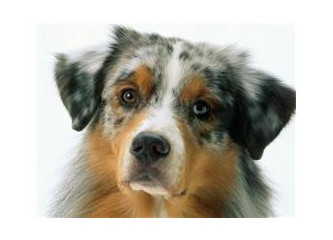 Köpeğim strese girdi! Ne yapmalıyım?