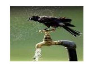 Su ve kuşun hikayesi