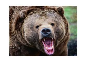 Bugün İstanbul'u ayılar bastı farkında mısınız?