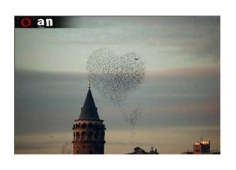 Kuşlar beni bağışlar (mı)