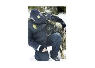 Danimarka Polisi = Panik