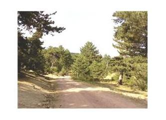 Türkmen Dağı -1 (Çifteler Çeşmesi)