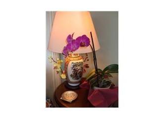 Orkide yetiştirilmesi