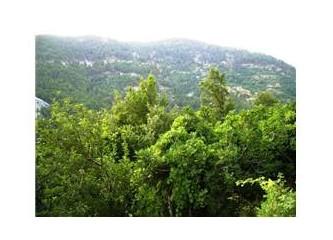 Yakmayalım... Söndürelim... Ormanları...