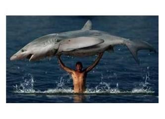 Beyninize bir köpekbalığı atın