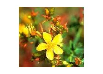 Doğal Antidepresan:Sarı Kantaron
