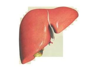 Sağlıklı karaciğer