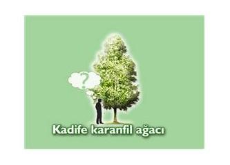 Kadife karanfil ağacı