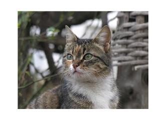 Kedinin gözlerindeki merak