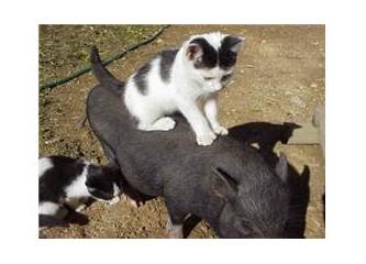 Türkiye'de hayvanları koruma kanunu