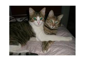 İlk kedilerimi internetten buldum