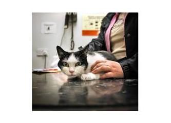 İpucu 6 – Hastalık anında kedinizi ne zaman veteriner hekime götürmelisiniz?