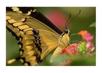 Yaşamda kelebek etkisi
