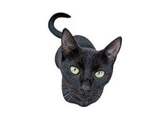Kara kedi geçmesi niçin uğursuzluk getirir?