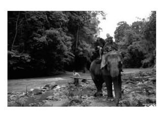 Hala özlüyoruz: Tayland (1) Chiang Mai