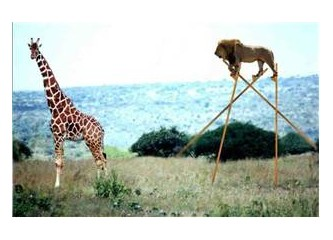 Olağanüstü Hayvanlar - 1