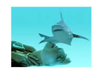 Köpekbalıkları ile yüzerken