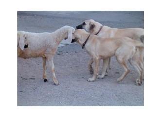 Hayvan hakları- I