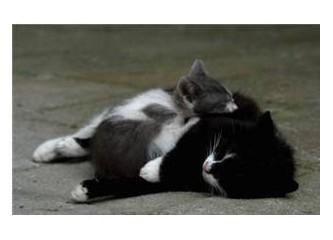 Biri küçük, iki kedi