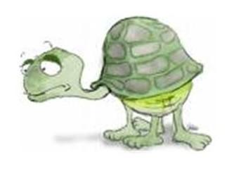 Kaplumbağa Milletinin Çok Yaşadığı Kadar Var