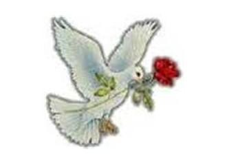 Gül ve güvercin