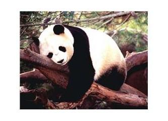 Panter panda